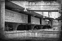 1933 Slaughterhouse in Shanghai, China
