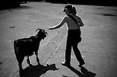 Wroclaw, Poland, April 4, 2009:<br /> Syrian goat encounters a young visitor at the .Wroclaw Zoo<br /> (Photo by Piotr Malecki / Napo Images)...Koza syryjska oraz jej mlody wielbiciel w Zoo..Wroclaw, Kwiecien 2009.Fot: Piotr Malecki / Napo Images