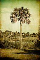 Cabbage Palm on Florida's Gulf Coast - with a little vintage makeover.