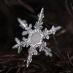 37 Snowflakes
