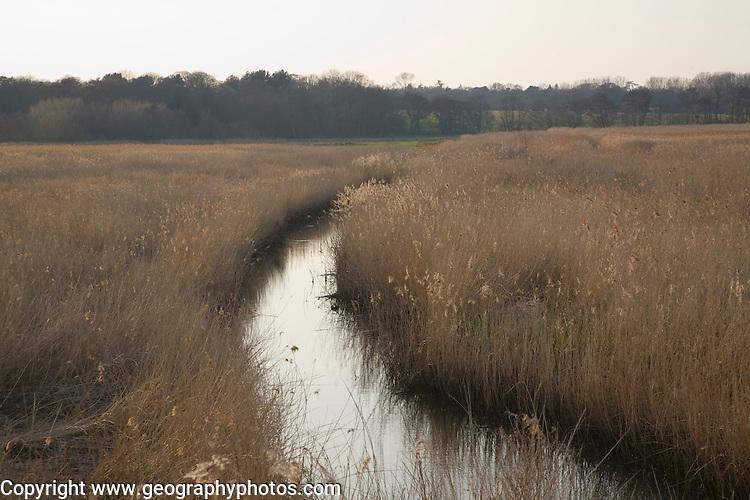 The Hen Reedbeds nature reserve, near Wangford, Suffolk, England