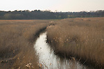 The Hen Reedbeds nature reserve, near Wangford, Suffolk, England