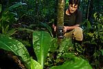 African Golden Cat (Caracal aurata aurata) researcher, David Mills, placing camera trap on tree, Kibale National Park, western Uganda