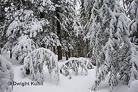 WT05-523z  Maine forest scene with snow cover