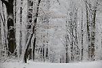 Europa, DEU, Deutschland, Nordrhein Westfalen, NRW, Rheinland, Niederrhein, Krefeld, Naturschutzgebiet Huelser Berg, Wald, Buchenwald, Baeume, Winter, Schnee, Kategorien und Themen, Natur, Umwelt, Landschaft, Jahreszeiten, Stimmungen, Landschaftsfotografie, Landschaften, Landschaftsphoto, Landschaftsphotographie, Wetter, Wetterelemente, Wetterlage, Wetterkunde, Witterung, Witterungsbedingungen, Wettererscheinungen, Meteorologie, Wettervorhersage....[Fuer die Nutzung gelten die jeweils gueltigen Allgemeinen Liefer-und Geschaeftsbedingungen. Nutzung nur gegen Verwendungsmeldung und Nachweis. Download der AGB unter http://www.image-box.com oder werden auf Anfrage zugesendet. Freigabe ist vorher erforderlich. Jede Nutzung des Fotos ist honorarpflichtig gemaess derzeit gueltiger MFM Liste - Kontakt, Uwe Schmid-Fotografie, Duisburg, Tel. (+49).2065.677997, ..archiv@image-box.com, www.image-box.com]