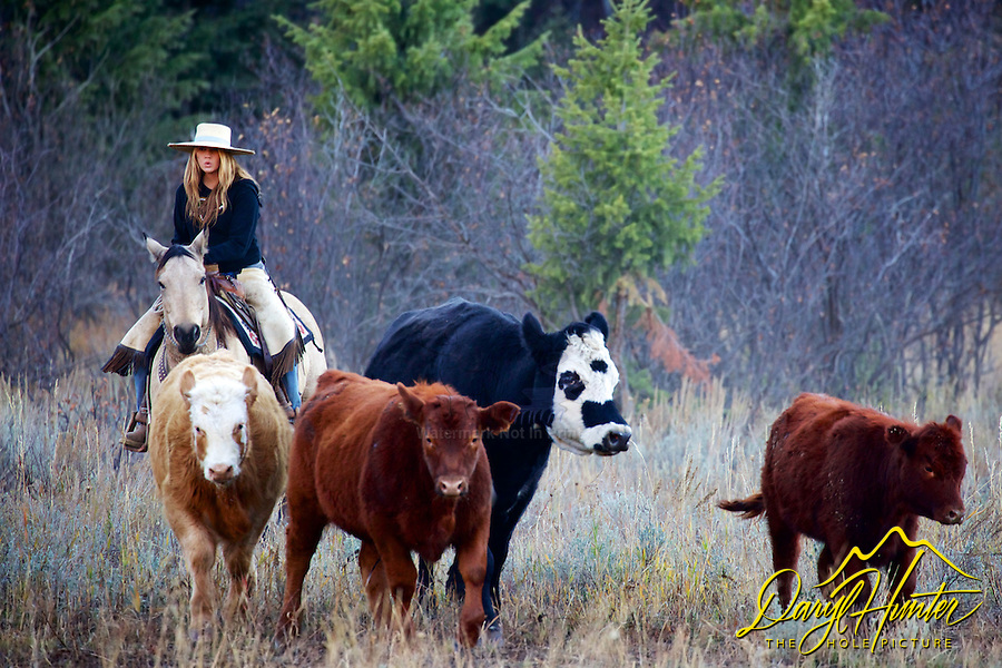 Cowgirl, Cydnie Clark working cows in Alpine Wyoming.  <br />