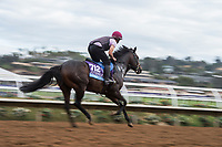 DEL MAR, CA - NOVEMBER 02: U S Navy Flag, owned by Derrick Smith, Mrs. John Magnier & Michael Tabor and trained by Aidan P. O'Brien, exercises in preparation for Sentient Jet Breeders' Cup Juvenile at Del Mar Thoroughbred Club on November 2, 2017 in Del Mar, California. (Photo by Jamey Price/Eclipse Sportswire/Breeders Cup)