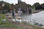 Woman feeding swans at Thorpeness Mere, Suffolk, England