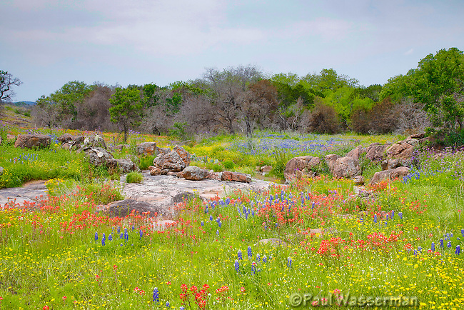 Bluebonnets and other wildflowers explode at Inks State Park in Texas