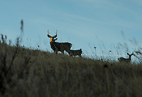 A white tail deer at Trope Ranch near Hullett, Wyoming, Wednesday, November 7, 2012.<br /> <br /> <br /> Photo by Matt Nager