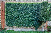 France, Sarthe (72),  Poncé-sur-le-Loir, jardin du château de Poncé en avril, patio, mur et lierre d'Irlande (Hedera helix, lauriers nobles taillés