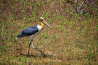 Stork Yala National Park, Wildlife