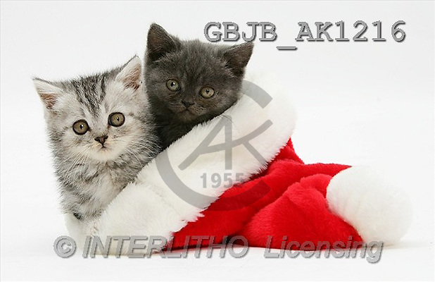 Kim, CHRISTMAS ANIMALS, photos(GBJBAK1216,#XA#) stickers