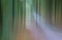 Abstract of Felbrigg Woods, Norfolk, UK