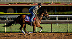 October 28, 2019 : Breeders' Cup Juvenile Fillies entrant Two Sixty, trained by Mark E. Casse, exercises in preparation for the Breeders' Cup World Championships at Santa Anita Park in Arcadia, California on October 28, 2019. Scott Serio/Eclipse Sportswire/Breeders' Cup/CSM