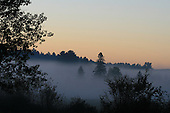 early morning mist over forest