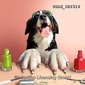 CHIARA,REALISTIC ANIMALS, REALISTISCHE TIERE, ANIMALES REALISTICOS, paintings+++++,USLGCHI516,#A#, EVERYDAY ,photos