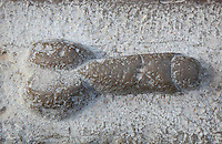 Sculpted stone phallus from the House of the Dog, thought to indicate the direction of the brothel, and also a symbol of fertility, Volubilis, Northern Morocco. Volubilis was founded in the 3rd century BC by the Phoenicians and was a Roman settlement from the 1st century AD. Volubilis was a thriving Roman olive growing town until 280 AD and was settled until the 11th century. The buildings were largely destroyed by an earthquake in the 18th century and have since been excavated and partly restored. Volubilis was listed as a UNESCO World Heritage Site in 1997. Picture by Manuel Cohen
