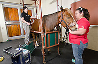"The technology known as ""extracorporeal,"" or outside of the body, shock-wave therapy has been available at the college since December 2014. This noninvasive treatment can stimulate healing in both new and old injuries to horses.<br />