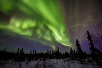 Winter landscape of Northern Lights (Aurora Borealis) as they dance over the tundra of interior Alaska just north of Fairbanks at Cleary Summit<br /> <br /> Photo by Jeff Schultz/SchultzPhoto.com  (C) 2016  ALL RIGHTS RESVERVED