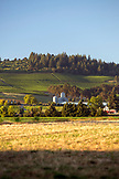 USA, Oregon, Willamette Valley, Stoller Vineyards and Winery, Dayton