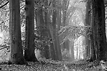 Europa, DEU, Deutschland, Nordrhein Westfalen, NRW, Rheinland, Niederrhein, Geldern, Naturschutzgebiet Fleuthkuhlen, Herbst, Baeume, Allee, Baumallee, Buchen, Buchenallee, Wald, Buchenwald, Morgenstimmung, Dunst, Kategorien und Themen, Natur, Umwelt, Landschaft, Jahreszeiten, Stimmungen, Landschaftsfotografie, Landschaften, Landschaftsphoto, Landschaftsphotographie, Naturschutz, Naturschutzgebiete, Landschaftsschutz, Biotop, Biotope, Landschaftsschutzgebiete, Landschaftsschutzgebiet, Oekologie, Oekologisch, Typisch, Landschaftstypisch, Landschaftspflege<br /> <br /> [Fuer die Nutzung gelten die jeweils gueltigen Allgemeinen Liefer-und Geschaeftsbedingungen. Nutzung nur gegen Verwendungsmeldung und Nachweis. Download der AGB unter http://www.image-box.com oder werden auf Anfrage zugesendet. Freigabe ist vorher erforderlich. Jede Nutzung des Fotos ist honorarpflichtig gemaess derzeit gueltiger MFM Liste - Kontakt, Uwe Schmid-Fotografie, Duisburg, Tel. (+49).2065.677997, <br /> archiv@image-box.com, www.image-box.com]