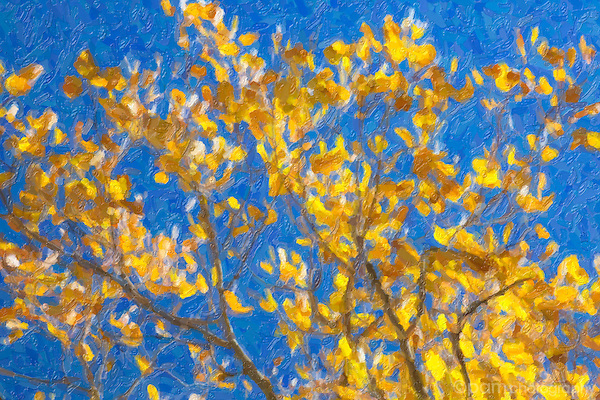 Photo art of colorful leaves on aspen tree in fall.