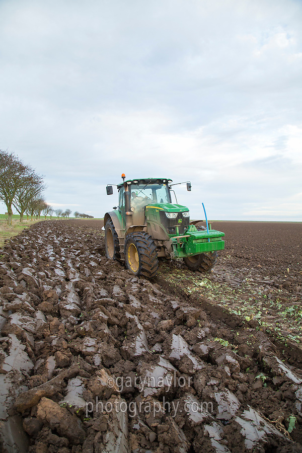 Ploughing dutch white cabbage land ready for drilling winter wheat - Lincolshire, November