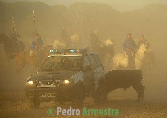 A bull mauls a car of the Spanish police during the running of the bulls in Tordesillas, on September 15, 2009. The festival is one of the oldest in Spain with roots dating back to the fifteenth century. The bull has to be enticed across the river from the village to the plain 'Vega' before it can be killed to honour the 'Virgen de la Pena'.   © Pedro ARMESTRE.