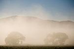 Poconip fog, cottonwood trees, Pine Nut Range, Nev.