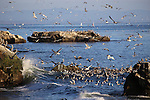 Monterey Bay National Marine Sanctuary.  5x7 postcards by Frank Balthis