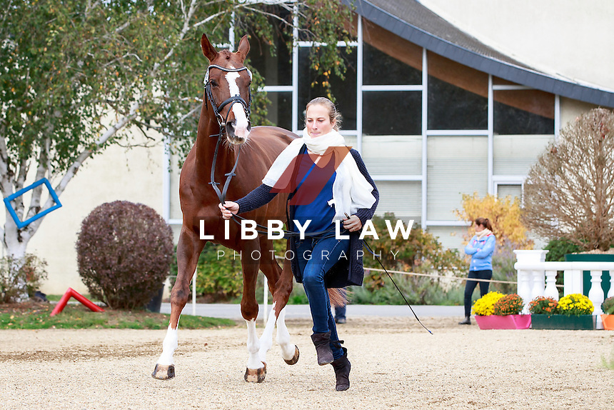 BEL-Lara De Liedekerke-Meier with Jive About Wonderland during the CCI2*7YO First Horse Inspection at 2016 Mondial du Lion FEI World Breeding Eventing Championships for Young Horses. Wednesday 19 October. Copyright Photo: Libby Law Photography