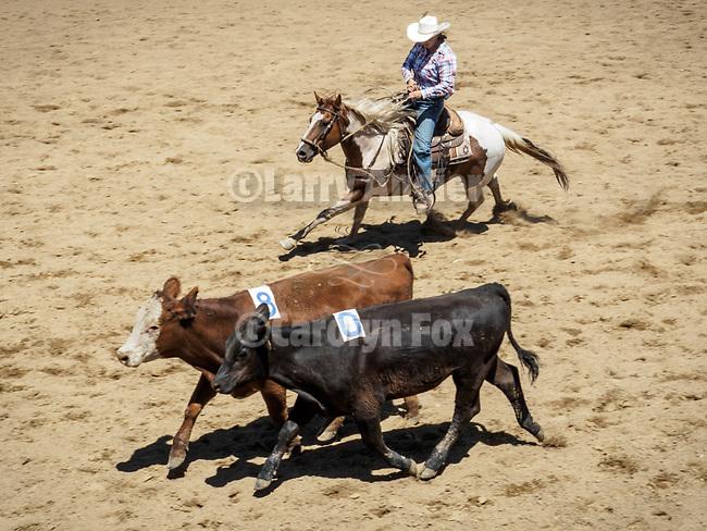 Saturday, Day 3 of the 79th Amador County Fair, Plymouth, Calif.<br /> <br /> Local cattlemen's ranch rodeo.<br /> <br /> Mattley &amp; Ann Dell'Orto<br /> <br /> <br /> #AmadorCountyFair, #PlymouthCalifornia,<br /> #TourAmador, #VisitAmador