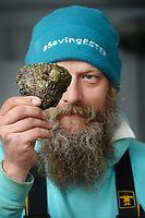 BNPS.co.uk (01202) 558833. <br /> Pic: ZacharyCulpin/BNPS<br /> <br /> Oyster gatherer Christopher Ranger shows off the Cornish oyster<br /> <br /> The Lone Ranger - A concerned oyster fisherman is crowdfunding to set up his very own 'micro-hatchery' in a bid to restore the UK's dwindling stocks of the shellfish.<br /> <br /> Chris Ranger, 44, currently runs Britain's last surviving oyster fishery on the River Fal in Mylor Churchtown, Cornwall.<br /> <br /> The site has been a hotbed for oyster activity for thousands of years but they are now on the brink of vanishing after years of overfishing.