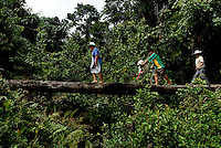 National senator Leonilda Zurita Vargas, left, along with her brother Rene Arandia Vargas, middle, and Francisco Bonefar, walk accross an old tree that lies over a river during their hour and a half hike through the jungles of the Chaparé in Bolivia in search of Leonilda's chaco, or coca farm to harvest the leaves. As a result of past limitations on coca production, Vagas had to hide the production of her farm, and still must hike off the road to work on the farm.