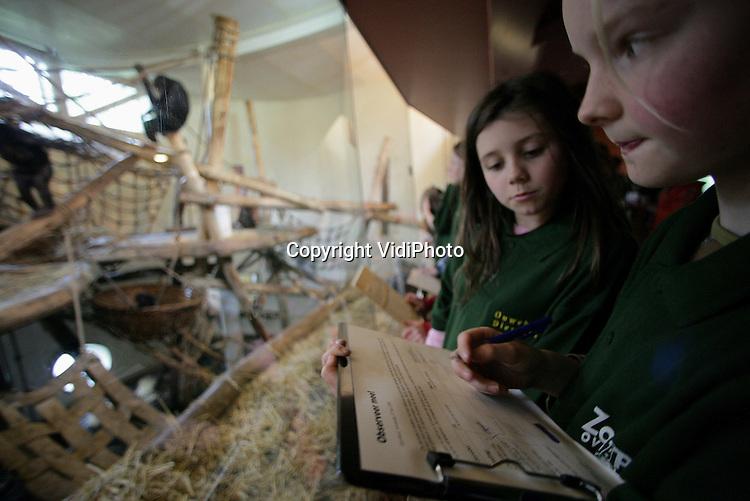 """Foto: VidiPhoto..APENHEUL - In de Apenheul in Apeldoorn is woensdag het startsein gegeven voor de landelijke actie """"Word jij de nieuwe dierentuin dierekteur"""", waar alle Nederlandse dierenparken aan mee doen. Kinderen die deelnemen maken kans om als """"dierekteur"""" mee te mogen praten over nieuwe dierentuinplannen. De Nederlandse Vereniging van Dierentuinen bestaat in juni 40 jaar. Basisschoolleerlingen mochten woensdag eten en speeltuig maken voor de Bonobo's in de Apenheul en het zelf in het Bonoboverblijf plaatsen. Foto: Observatie na de kooiverrijking."""