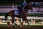 OCT 25: Breeders' Cup Dirt Mile entrant Blue Chipper, trained by Kim Young Kwan, gallops at Santa Anita Park in Arcadia, California on Oct 25, 2019. Evers/Eclipse Sportswire/Breeders' Cup