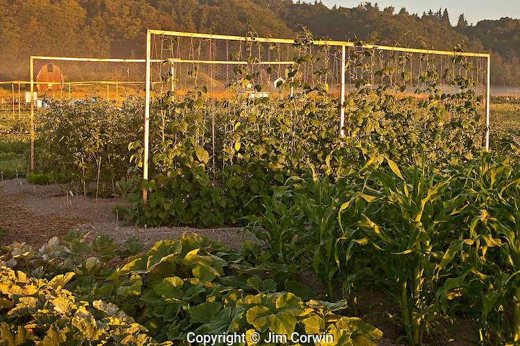 Sunrise in valley with community vegetable garden.