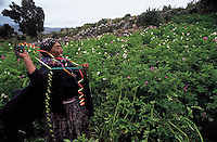 El primer lunes de carnaval , a orillas del lago Titicaca el pueblo aymara celebra el ritual del Jatha Katu, intercambio sagrado de regalos entre los campesinos y la Pachamama. + indio, indigena, celebracion *Every year l near the Titicaca Lake, South of Peru, aymra indians  in which aymara idians celebrate the Jatha Katu in honor to  Pachamama, the Mother Earth *Le premier lundi de carnaval, près du lac Titicaca (haut-plateau boliviano-péruvien). Le village Aymara célèbre le rituel familial de Jatha Katu. Il s'agit d'un échange sacrée entre les paysans et la Pachamama. Selon les croyances ce rituel permettra d'assurer des récoltes abondantes. +coutume, tradition, religion, croyant, festivité, fête