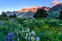 France, Hautes Alpes, Villar d'Arene, Alpine botanical garden of Lautaret, the plants of Siberia (Iris siberica ...) in front and Pyrenees area behind, far, the Combeynot bottom at sunset // France, Hautes-Alpes (05), Villar-d'Arène, jardin alpin du Lautaret, coucher de soleil sur les plantes de Sibérie (Iris siberica...) devant et Pyrénées derrière et le Combeynot en fond (montagne)