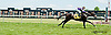Trumpeter Swan winning at Delaware Park on 6/22/13