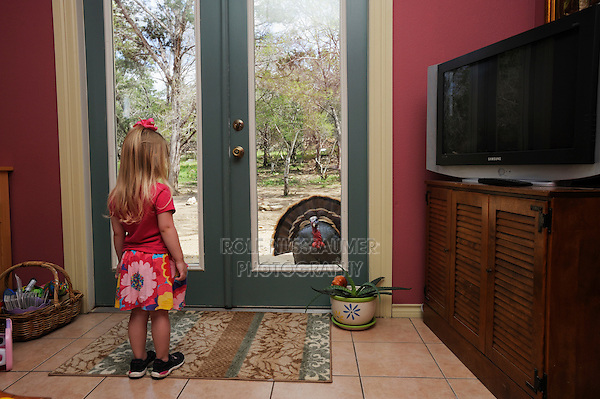 Wild Turkey (Meleagris gallopavo), Girl watching turkey displaying, New Braunfels, Central Texas, USA