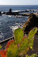 Opuntie (Ficus indica) auf der Insel Flores, Azoren, Portugal