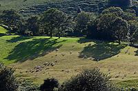 Europe/France/Aquitaine/64/Pyrénées-Atlantiques/Pays-Basque/Env d' Itxassou: Paturages sur les pentes des Pyrénées basques depuis le Mont Artzamendi 926 m,