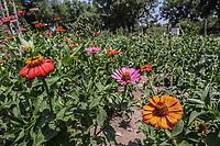 Flores  (Foto: Marisol Soto/NortePhoto)<br /> <br /> <br /> IV Festival Maria Bonita en Quiriego, Sonora.