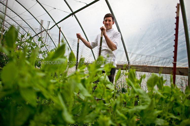 "5/14/2011--Lummi Island, WA, USA...Chef Blaine Wetzel of the Willow Inn at the farm near the restaurant that supplies it with fresh food. Four famers help on the farm...Willows Inn, on the tiny San Juan island of Lummi, is about two hours from Seattle by car and ferry. Yet it is about to become a destination restaurant, thanks to its new chef, Blaine Wetzel. The 24-year-old, formerly the protégé of Rene Redzepi at Noma, the Copenhagen restaurant that was ranked the ""best restaurant in the world"" for 2010 by S. Pellegrino, took over the kitchen at Willows last year. The restaurant itself reopens in February; expect a menu with an obsessive focus on local ingredients, in the style of Noma. Since he was hired, Mr. Wetzel has been working with a farmer and an urchin diver who work solely for him. (SOURCE: NYT)...©2011 Stuart Isett. All rights reserved."