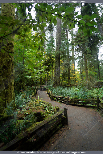 Trail path through Cathedral grove ancient forest of MacMillan Provincial Park, Vancouver Island, British Columbia, Canada Image © MaximImages, License at https://www.maximimages.com