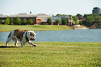 Bully XX Champ walking at Chadwick Lake.<br />