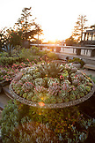 USA, California, Big Sur, Esalen, concrete pot filled with succulents outside the lodge dining area