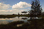 Nature walks meander through the protected wetlands at Henlopen, near Rehoboth Beach, Delaware, USA.